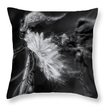 Milkweed Throw Pillow by Louise Kumpf