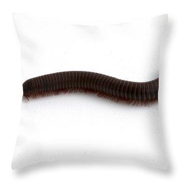 Millipede  Throw Pillow