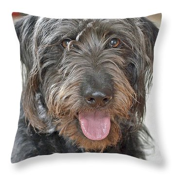 Throw Pillow featuring the photograph Milo by Lisa Phillips