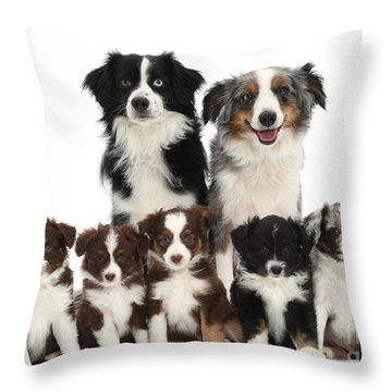 Miniature American Shepherd Dog Throw Pillow by Mark Taylor