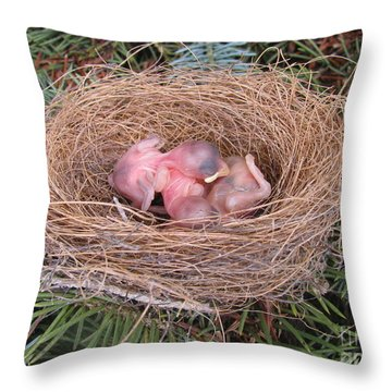 Throw Pillow featuring the photograph Miracle Of Birth _ Baby Robins 4 by Margaret Newcomb