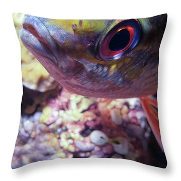 Miscellaneous Fish 5 Throw Pillow by Dawn Eshelman