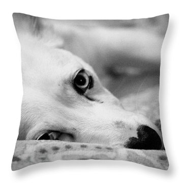 Throw Pillow featuring the photograph Miss Donut  by Faith Williams