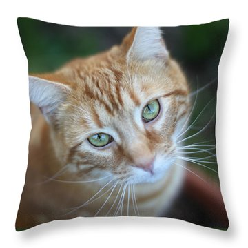 Miss Lucy Mcgillicuddy Throw Pillow by Melanie Lankford Photography