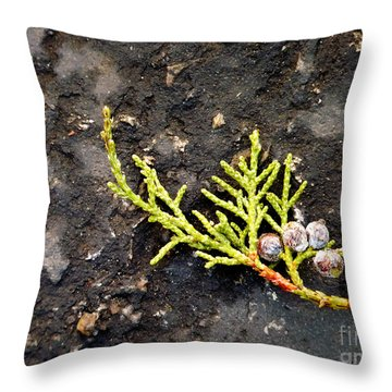 Throw Pillow featuring the photograph Missing Christmas by Meghan at FireBonnet Art