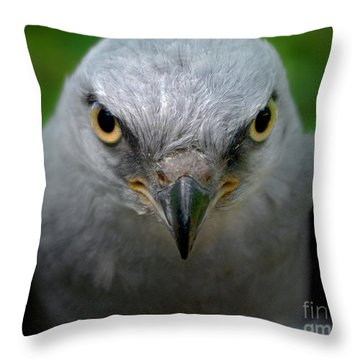 Mississippi Kite Stare Throw Pillow