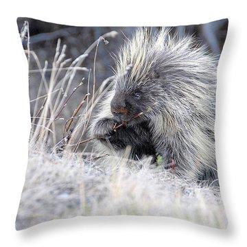 Throw Pillow featuring the photograph Mister Porcupine - Denali Alaska by Dyle   Warren