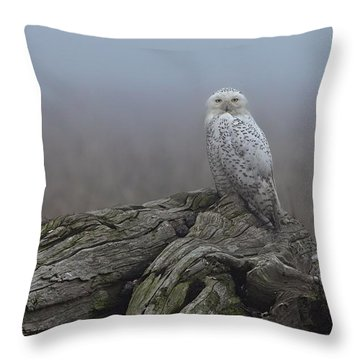 Throw Pillow featuring the photograph Misty Morning Snowy Owl by Daniel Behm