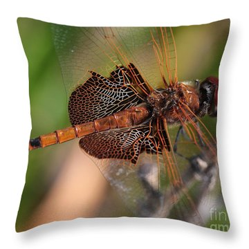 Mocha And Cream Dragonfly Profile Throw Pillow by Kenny Glotfelty
