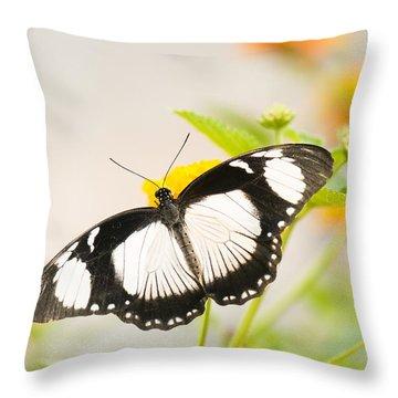 Mocker Swallowtail Throw Pillow by Anne Gilbert