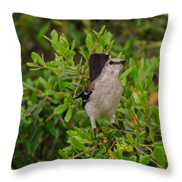 Mockingbird In Tree Throw Pillow