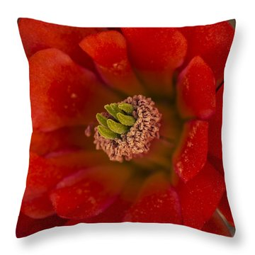 Mojave Mound Cactus Closeup Throw Pillow