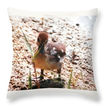 Throw Pillow featuring the photograph Duckling Searching by Belinda Lee