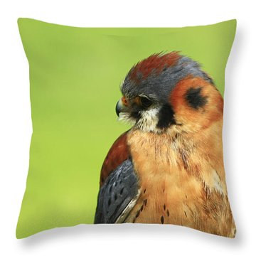 Moments Of Beauty American Kestrel Falcon  Throw Pillow by Inspired Nature Photography Fine Art Photography