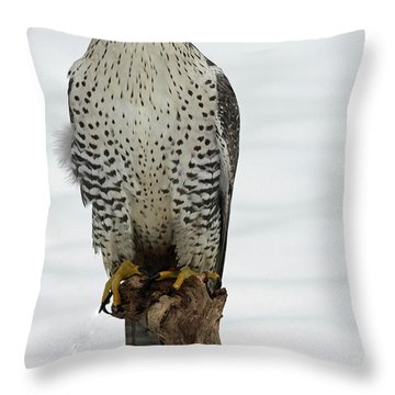 Moments Of Stillness Gyrfalcon In The Snow Throw Pillow by Inspired Nature Photography Fine Art Photography
