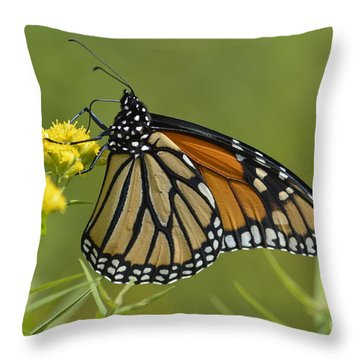Monarch 2014 Throw Pillow by Randy Bodkins