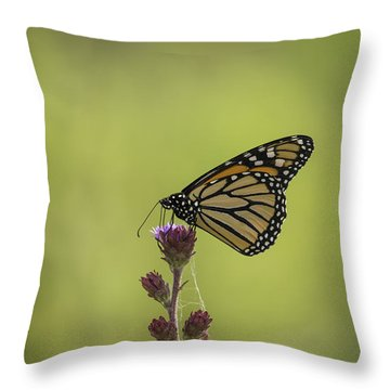 Monarch And Blazing Star Throw Pillow