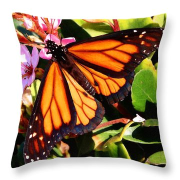 Monarch And Hawthorn Throw Pillow by Timothy Bulone