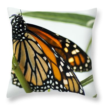 Monarch Beauty Throw Pillow by Carolyn Marshall
