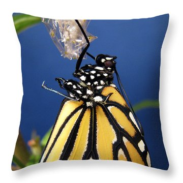 Monarch Butterfly Emerging From Chrysalis Throw Pillow by Inspired Nature Photography Fine Art Photography