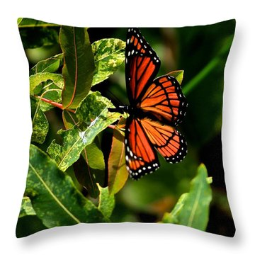 Viceroy Butterfly II Throw Pillow