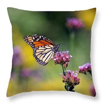 Monarch Butterfly In Field On Verbena Throw Pillow by Karen Adams