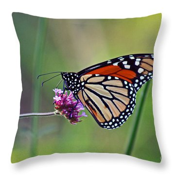 Monarch Butterfly In Garden Throw Pillow by Karen Adams