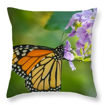 Monarch Butterfly Throw Pillow by Jane Luxton