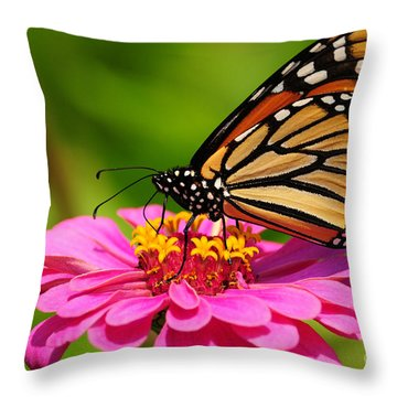 Throw Pillow featuring the photograph Monarch Butterfly On Zinnia by Olivia Hardwicke