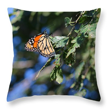 Throw Pillow featuring the photograph Monarch Butterfly by Rebecca Davis