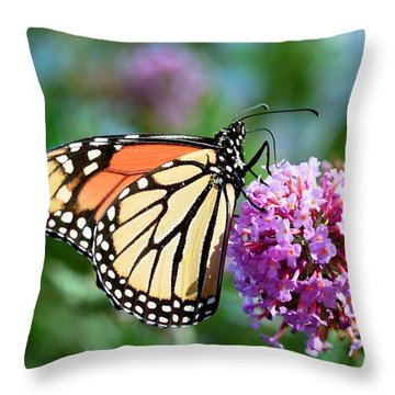 Monarch Butterfly Soaking Up The Sun Throw Pillow