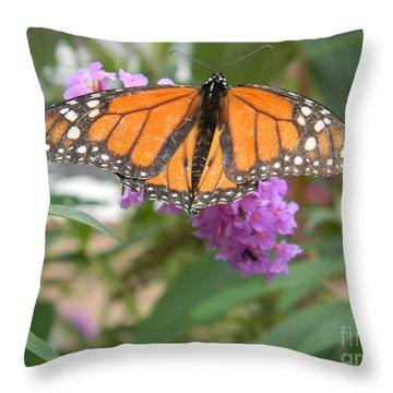 Monarch Butterfly Suckling A Flower Throw Pillow