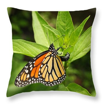 Monarch Egg Time Throw Pillow