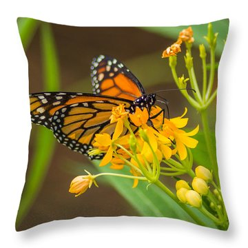 Throw Pillow featuring the photograph Monarch by Jane Luxton