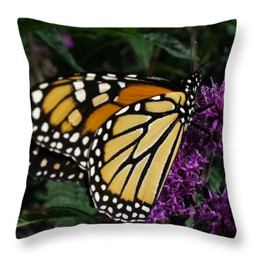 Throw Pillow featuring the photograph Monarch by Lingfai Leung