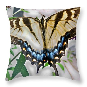 Monarch Majesty Throw Pillow by Judith Morris