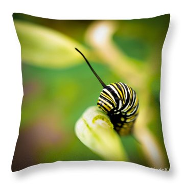 Throw Pillow featuring the photograph Monarch Offspring Squared by TK Goforth