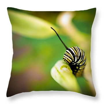 Monarch Offspring Throw Pillow by TK Goforth