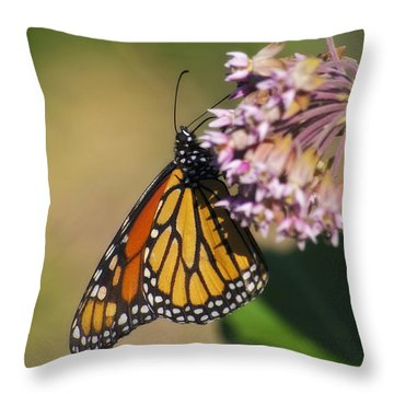Monarch On Milkweed Throw Pillow by Shelly Gunderson