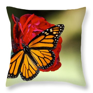 Monarch On Rose Throw Pillow by Debbie Karnes