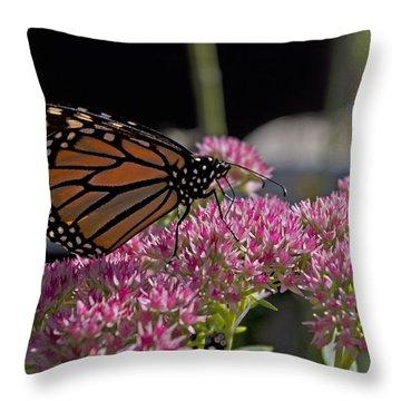 Monarch On Sedum Throw Pillow by Shelly Gunderson