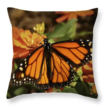 Monarch Spotlight. Throw Pillow