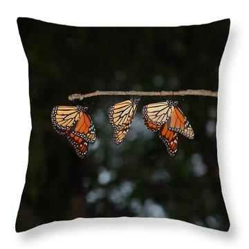 Monarch Trio Throw Pillow