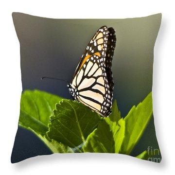 Monark Butterfly No. 2 Throw Pillow