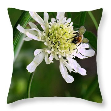 Throw Pillow featuring the photograph Monet's Garden Bee. Giverny by Jennie Breeze