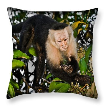 Monkey Business  Throw Pillow by Gary Keesler