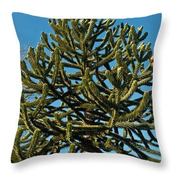 Monkey Puzzle Tree E Throw Pillow