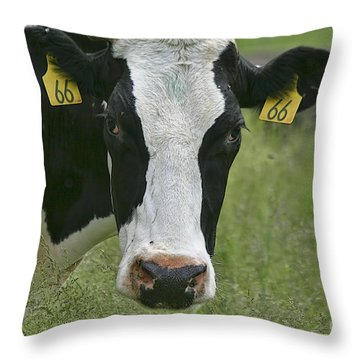 Moo Moo Eyes Throw Pillow by Deborah Benoit