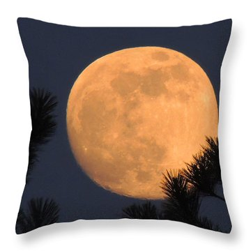 Throw Pillow featuring the photograph Moon Pines by Charlotte Schafer