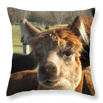 Moonacre Alpaca I Throw Pillow